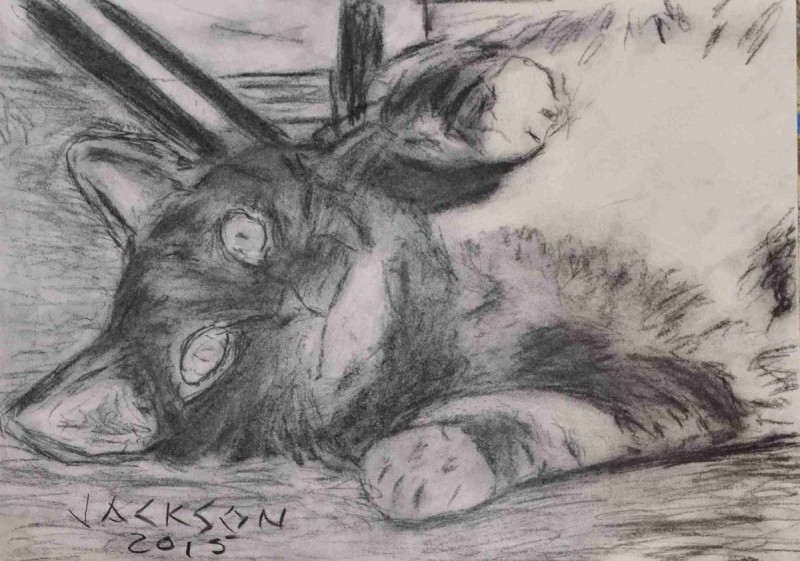 Cat Charcoal Drawing on Paper
